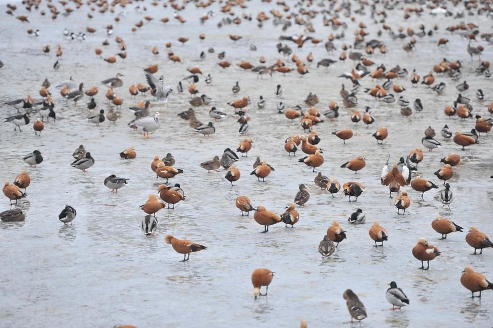 «Комсомолка» выяснила, какие птицы покинут Москву, а какие останутся зимовать.