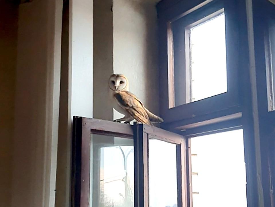 Молодая сова залетела в офис на автозаправке. Фото: ptushki.org