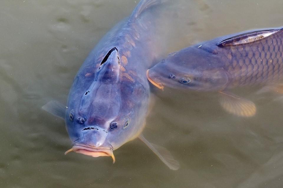 Вор сложил рыбу в мешки и перетащил в свой пруд. Фото: pixabay.com.