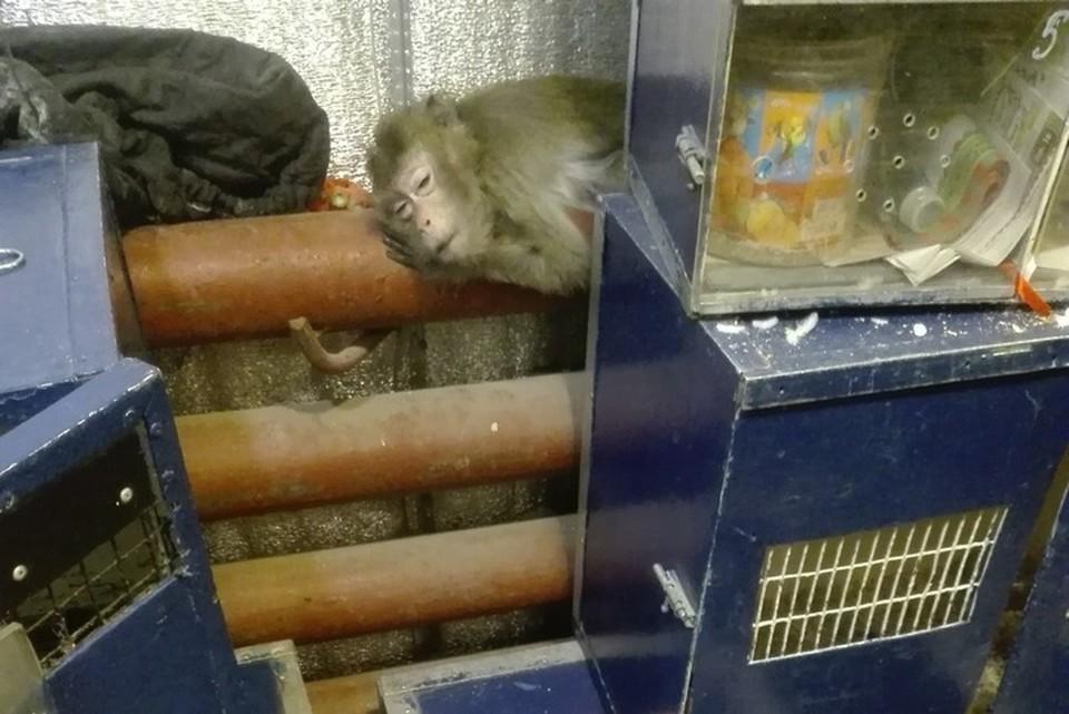 Бедные обезьяны жались к батареям, чтобы согреться. Фото: Алиса Соколова