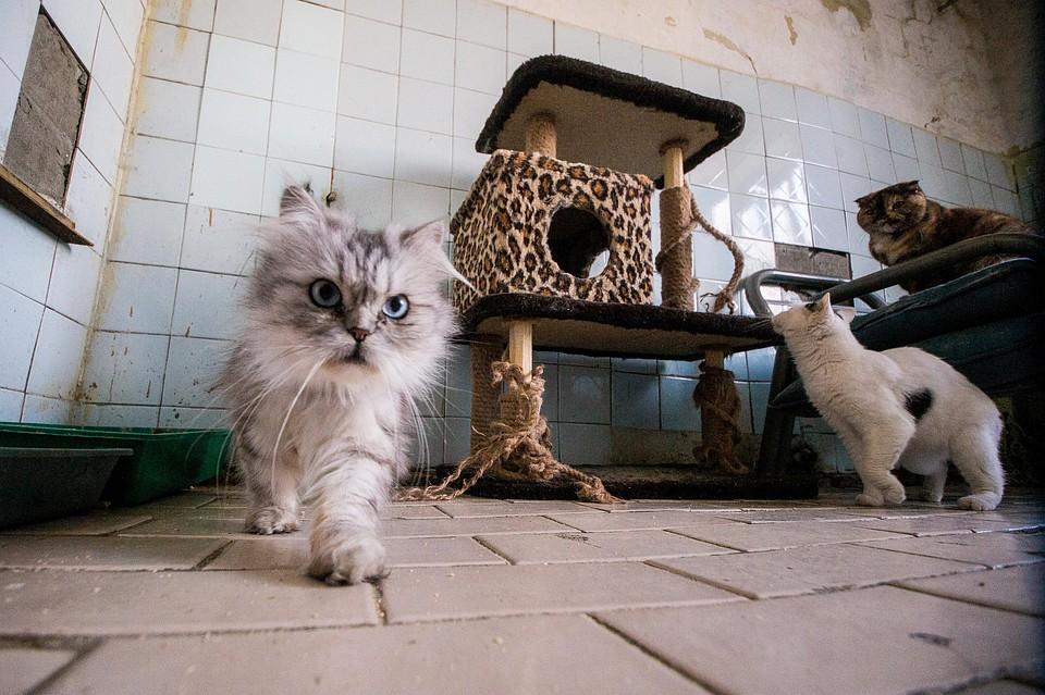 Акция, которую зоозащитники Краснодара не провели, должна была пройти в поддержку животных