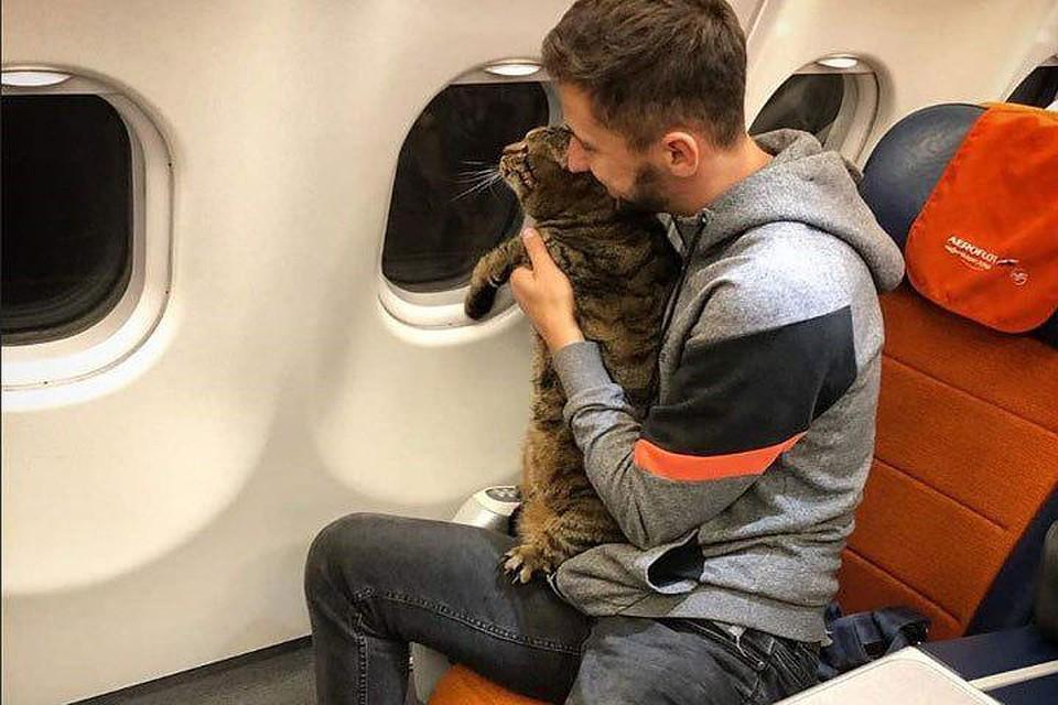 Михаил подменил на взвешивании кота и полетел домой бизнес-классом.