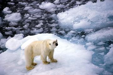 """Глобальное потепление привело к """"сквознякам"""" из Арктики"""