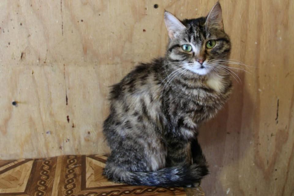 """""""Жалко денег на корм"""": хозяева вернули кошку в приют, потому что не хотели ее кормить. Фото: """"Частный приют для кошек """"Томасина"""" в соцсетях."""
