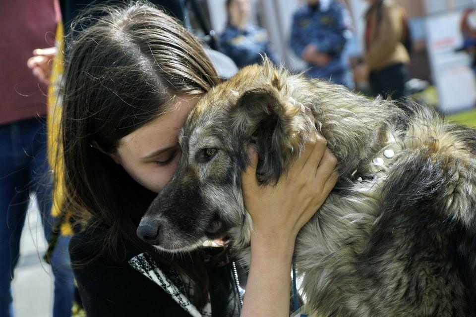 В выходные москвичи смогут забрать домой собак и кошек из приюта.