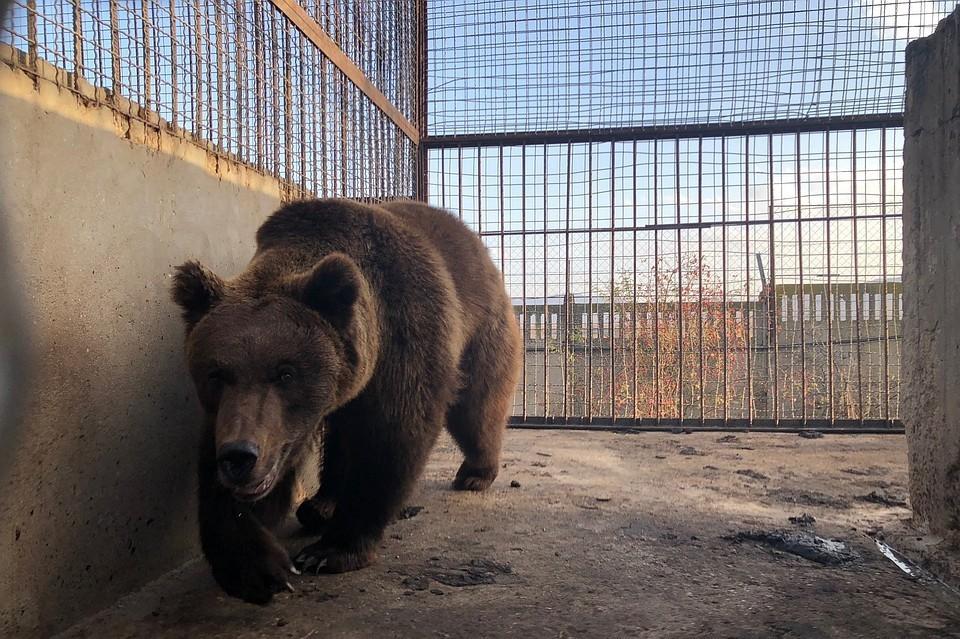 Медведей из Самары передали Зубкову. Фото: пресс-служба зоопарка