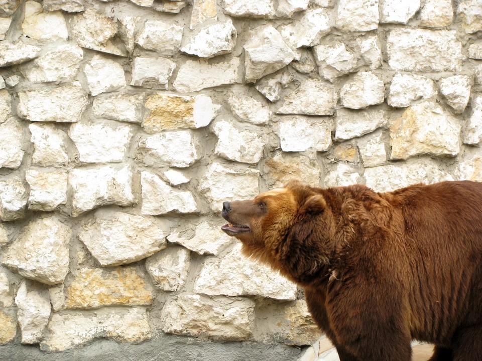 Зоопарку грозит закрытие, и животных придется убить