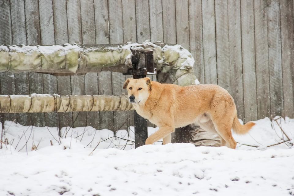 За одну неделю от собак пострадали двое детей, по словам местных жителей