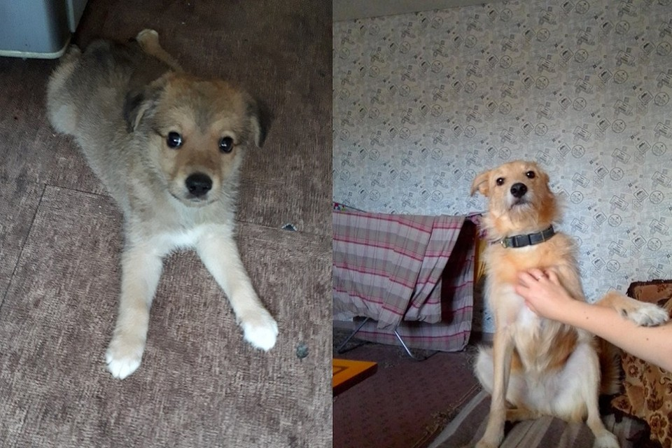 Эти снимки сделаны с разницей около года. Фото: https://vk.com/cat_nsk
