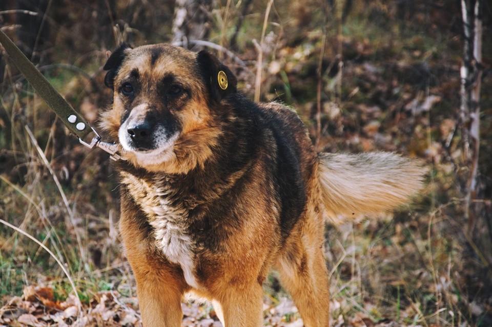 Пес с кошачьим именем Барсик