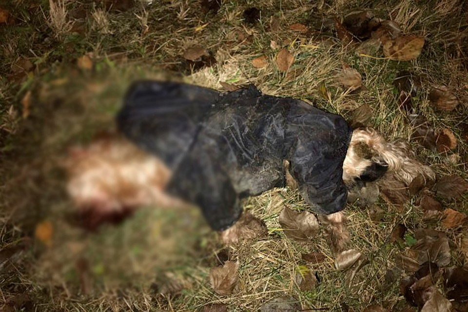 Пропавшую собаку в Петербурге нашли мертвой.