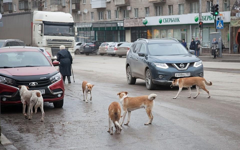Бродячие псы освоились в наших городах.