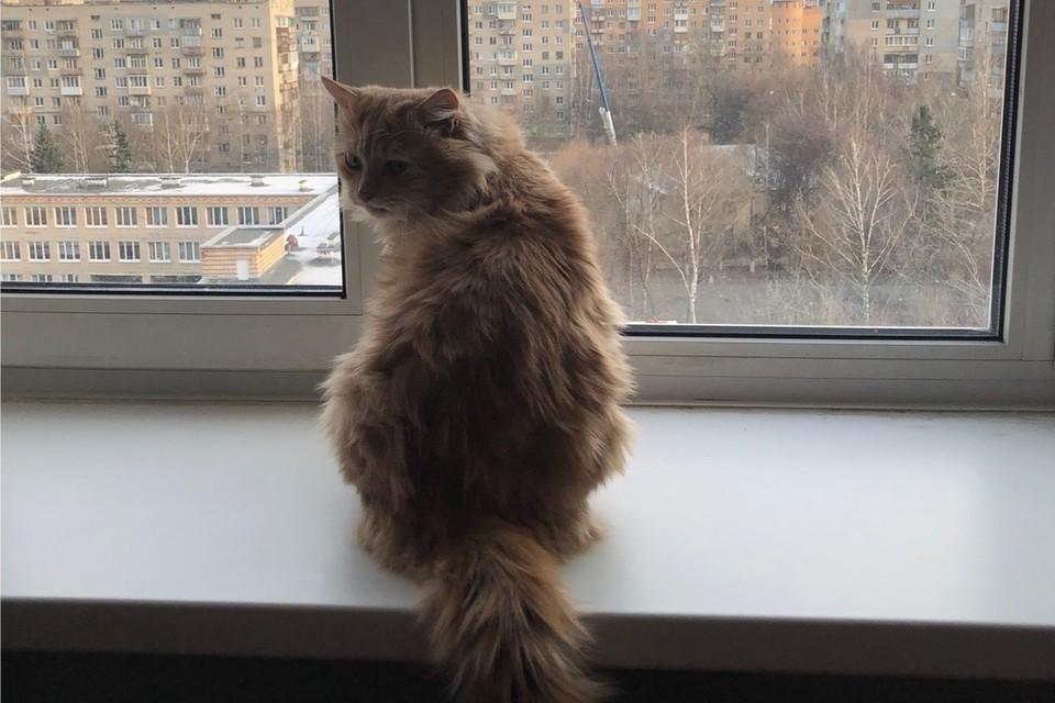 Кот из Ялты теперь живет в Москве. Фото: ПОДСЛУШАНО ЯЛТА/VK