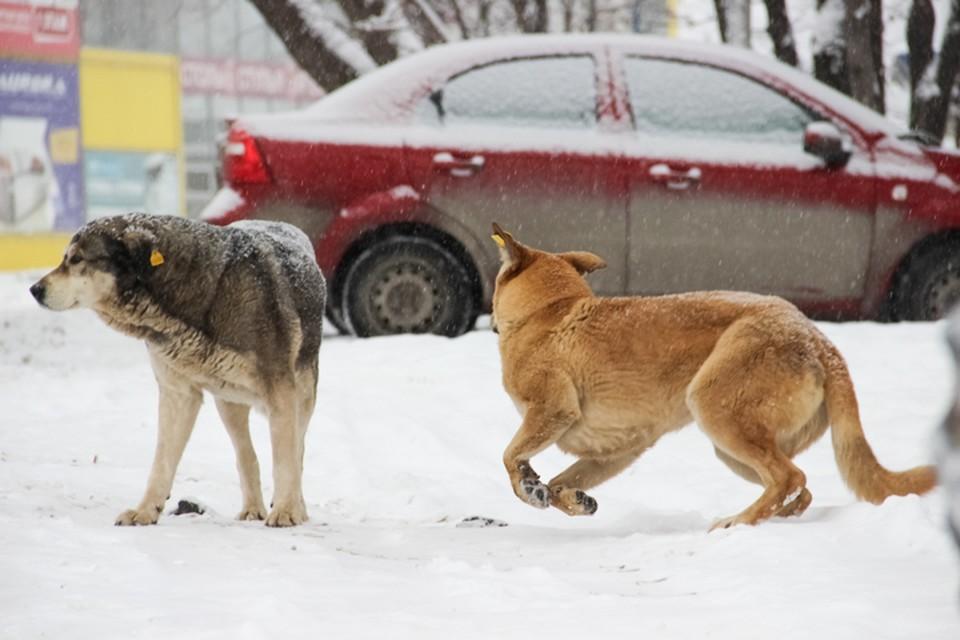 Собаки напали на детей в частном секторе Висима.