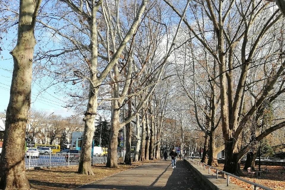 В городах и селах все деревья должны быть на строгом учете.