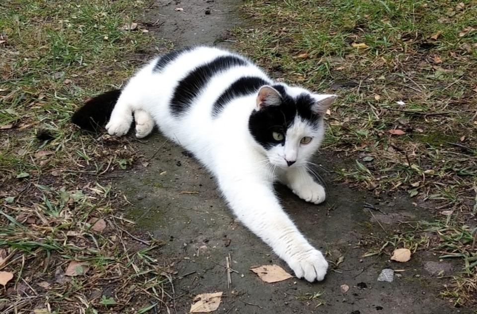 Зефира гоняют местные коты, поэтому волонтеры хотят поскорее пристроить его домой. Фото: vk.com/krasnosel_news