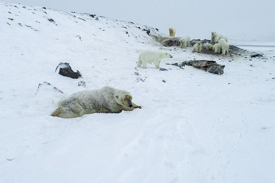 Из-за опасной ситуации в селе отменили все общественные мероприятия. Фото: Максим Деминов / WWF России