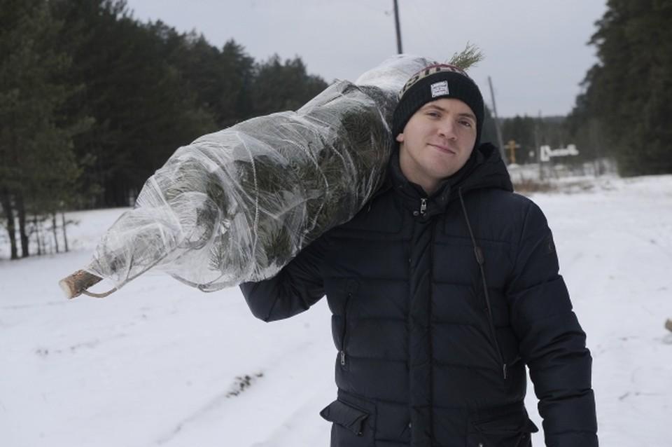 Журналист КП-Екатеринбург Олег Галимов с спиленой и упакованой новогодней елью на территории Сысертского лесничества