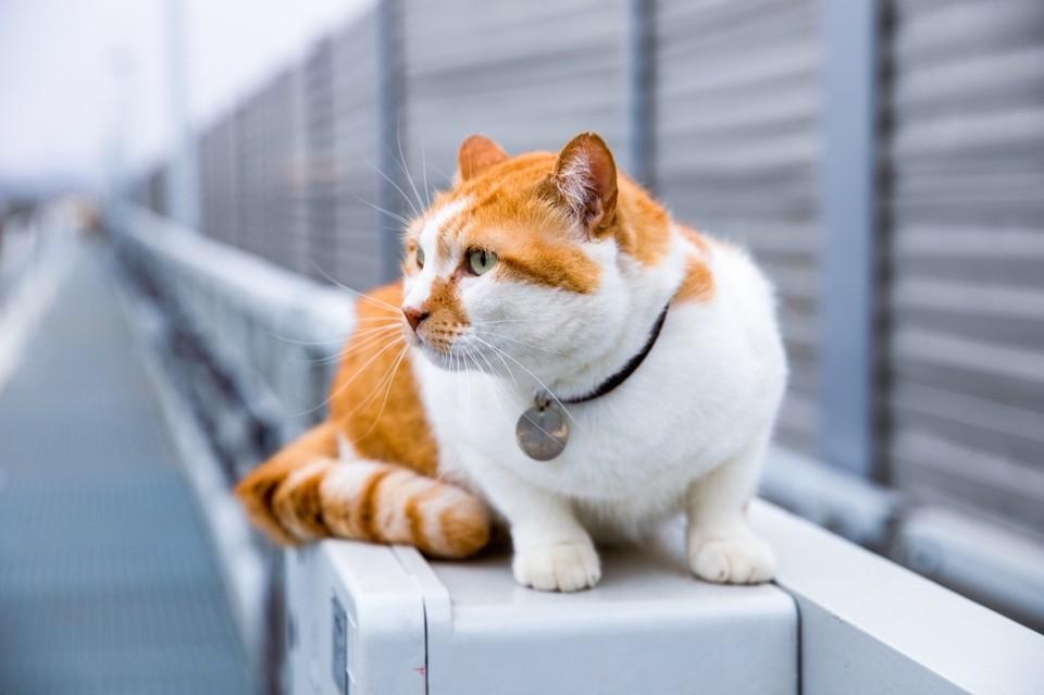 Рыжий с самого начала на стройке века. Фото: кот Моста/VK