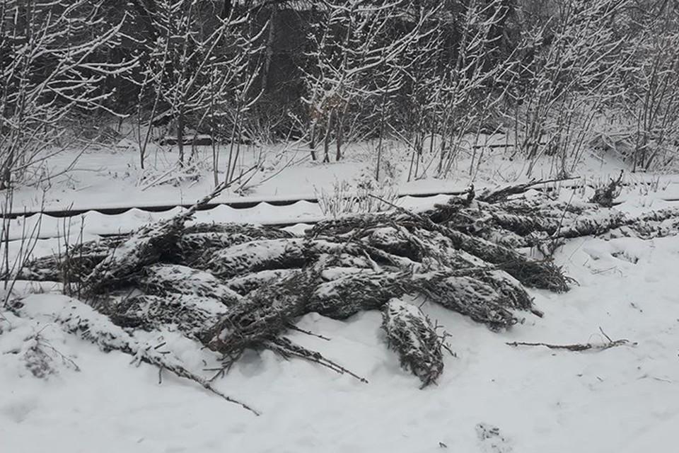 Нижегородцев возмутили свалки нераспроданных елок. Фото: Вера СУРИКОВА