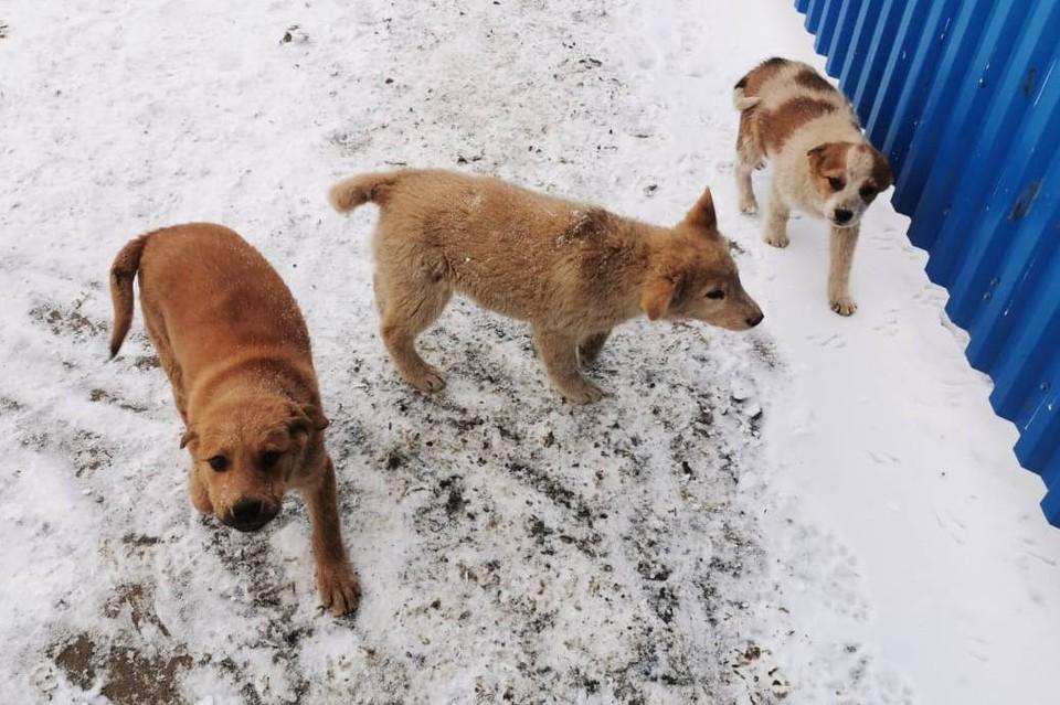 Трех щенков спасли из мусорки в Саратове