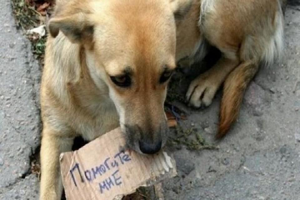Они тоже хотят жить. Фото: mindomo.com