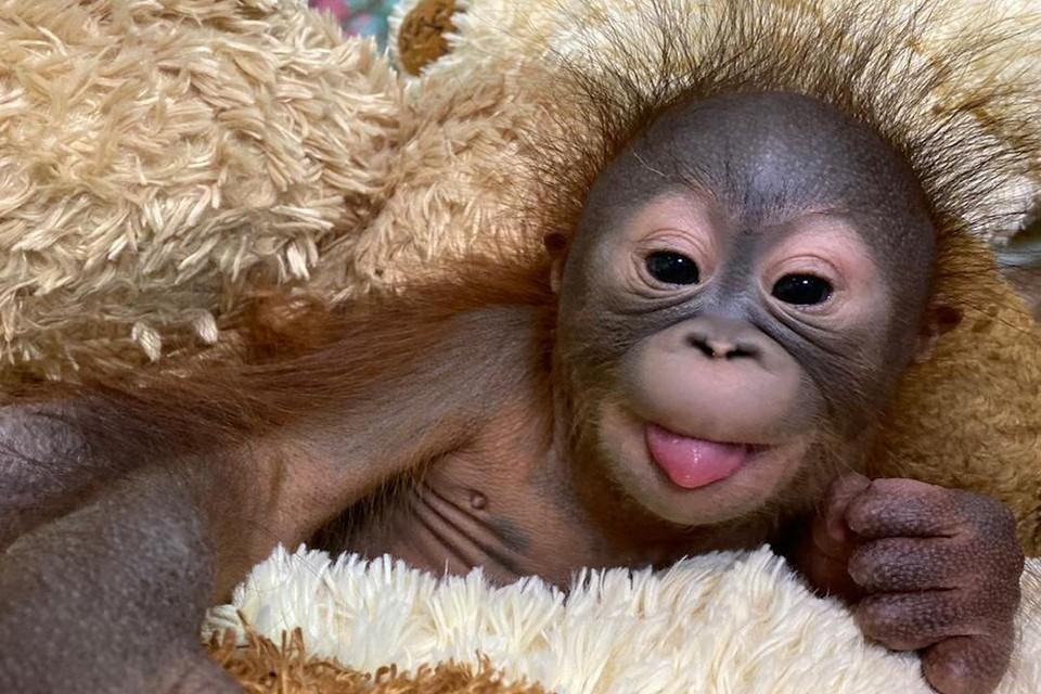 Малышку назвали Джулией. Фото: Новосибирский зоопарк.
