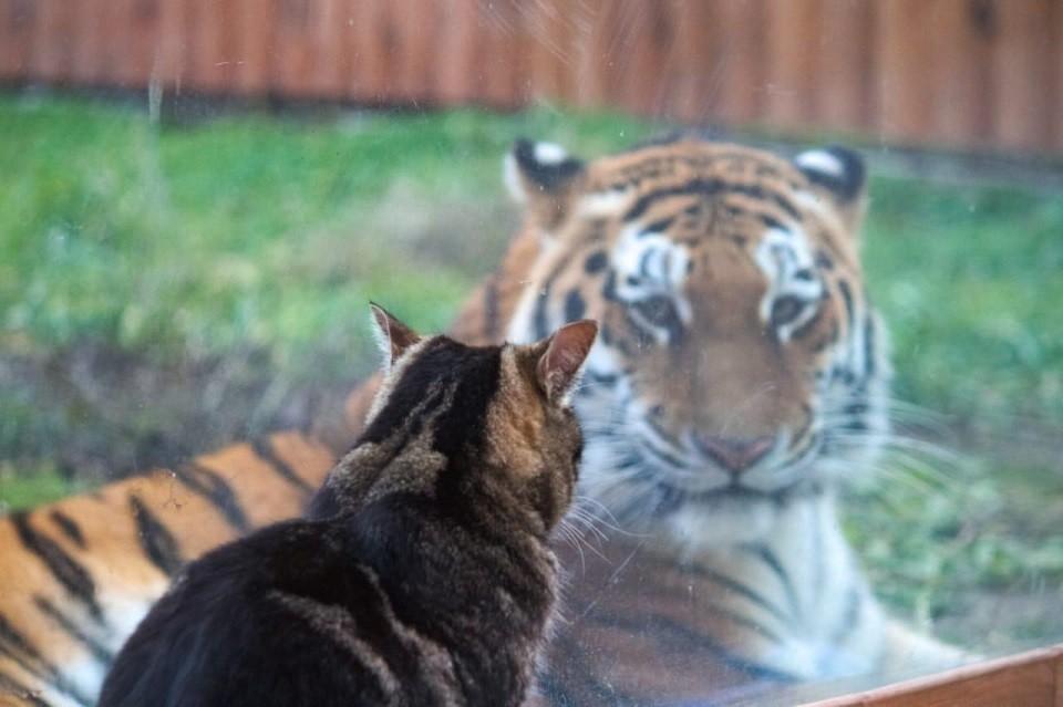 Хвостатая парочка умилила посетителей ростовского зоопарка. Фото: zoopark-rostov.ru