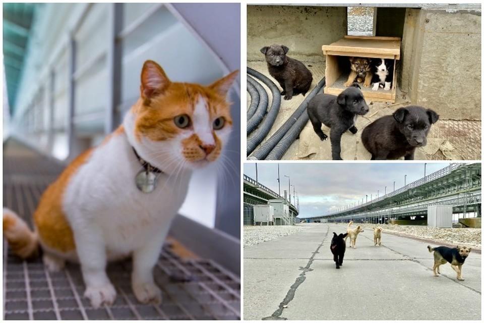 Мостик ищет хозяев для своих друзей. Фото: кот Мостик/VK