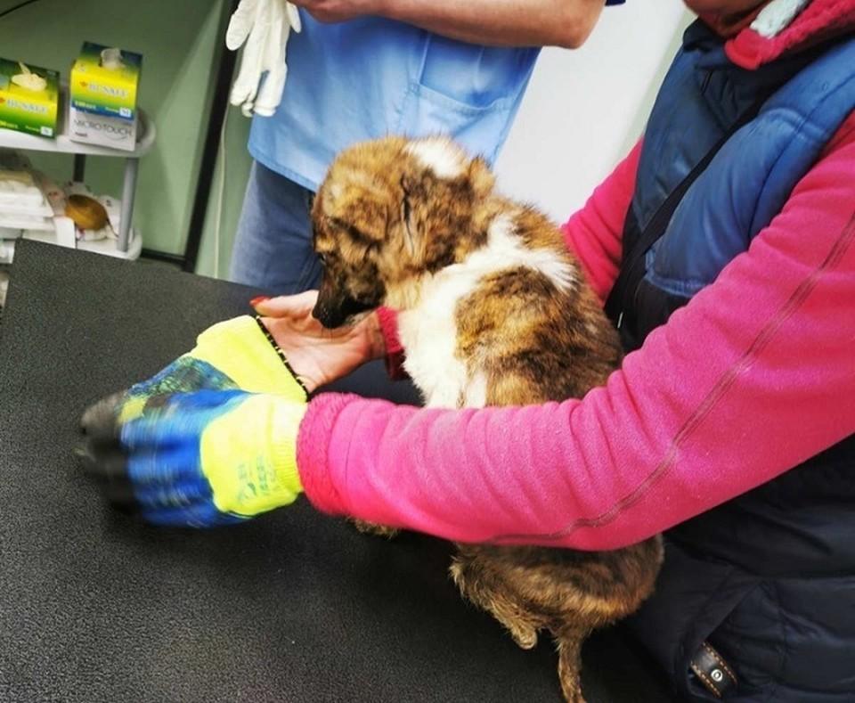 """щенок, после того, как его забрали от нерадивых хозяев Фото: АНО """"Желтая бирка"""""""