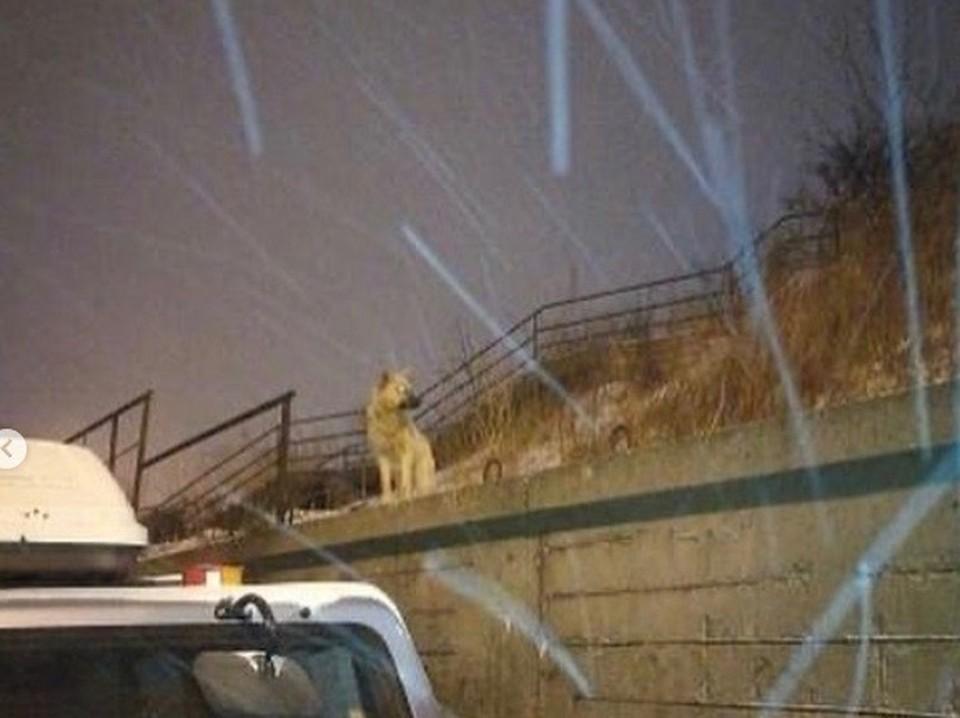 Во Владивостоке собаки покусали девочку. Фото: vdk_news
