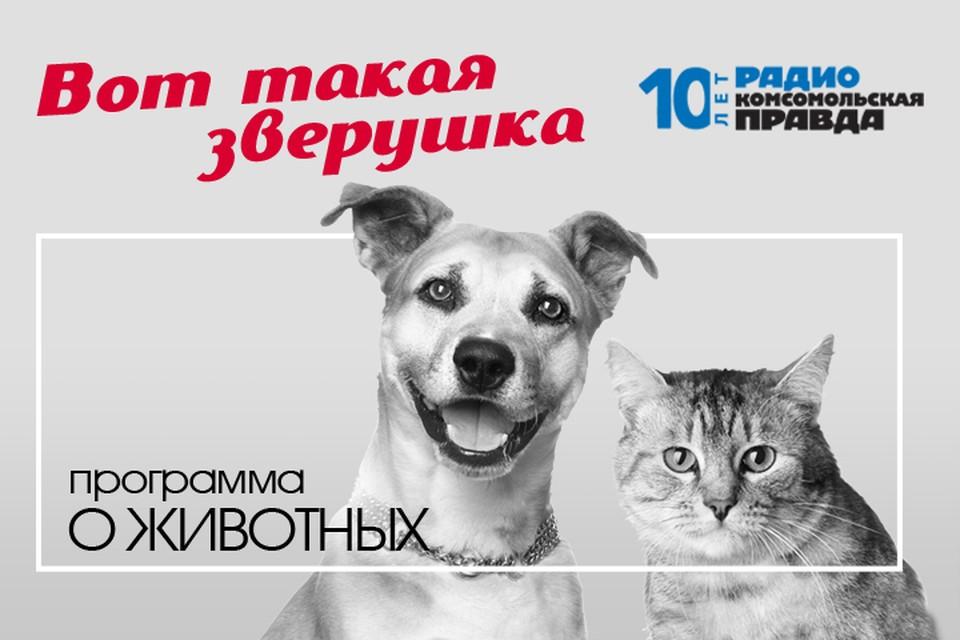 Разбираемся вместе с ветеринарным врачом и отвечаем на вопросы слушателей