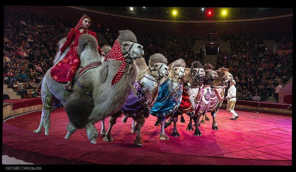 все фото цирка медведи на буйволах правильно