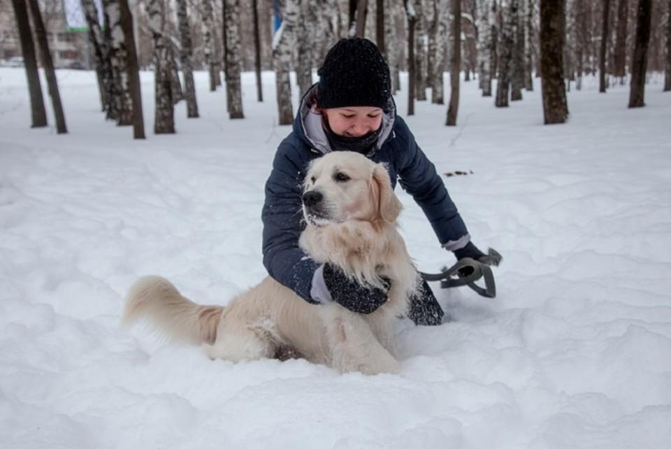 Студенты-ветеринары УрГАУ могут погулять с животным, купить ему еды и проконсультировать по уходу