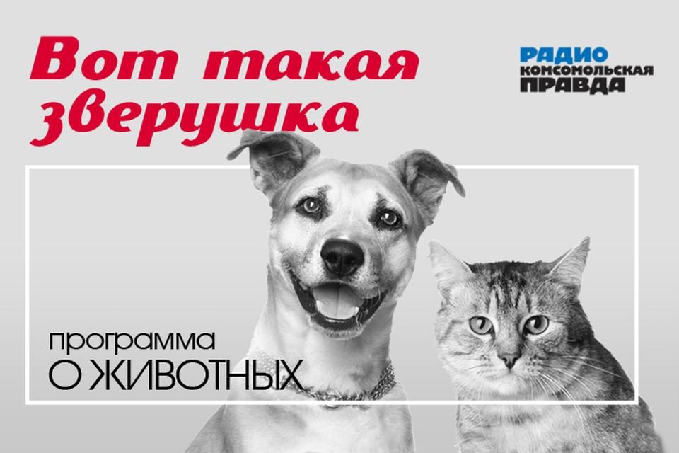 Кошек и собак тоже касается: как коронавирус изменит жизнь домашних животных – компаньонов