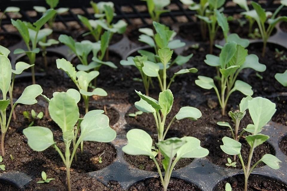 Пора на дачу: тюменским садоводам и огородникам предлагают покупать рассаду по телефону