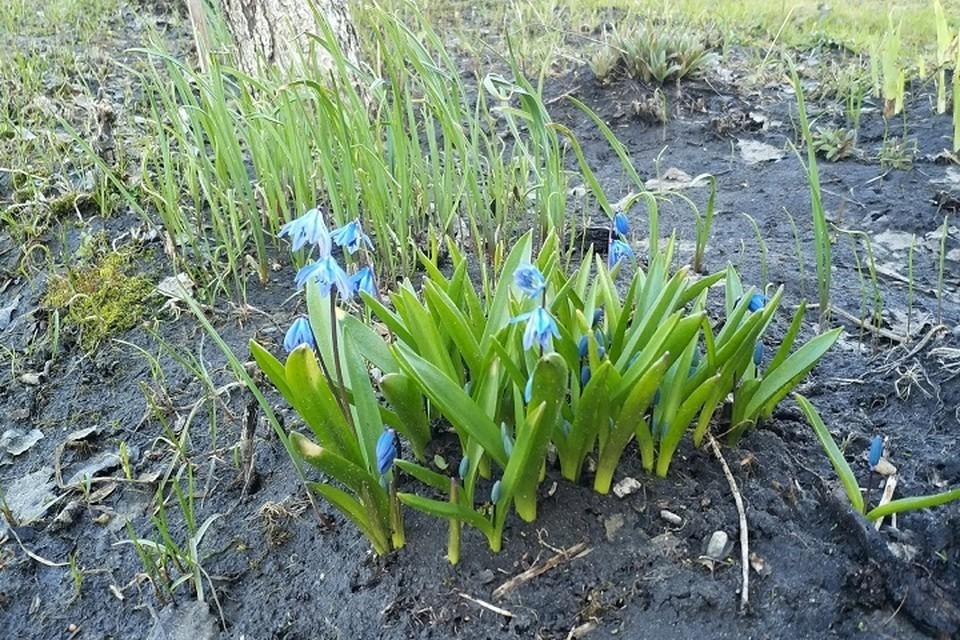Погода на Ямале 12 мая: ожидаются дожди и грозы
