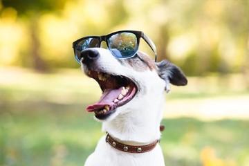Кто сказал «гав»: Фотоконкурс для лучших собак Санкт-Петербурга