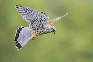 В Москве начали гнездиться птицы, занесенные в Красную книгу