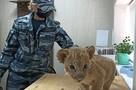 Истощен и напуган: под Волгоградом в багажнике автобуса полицейские нашли маленького львенка