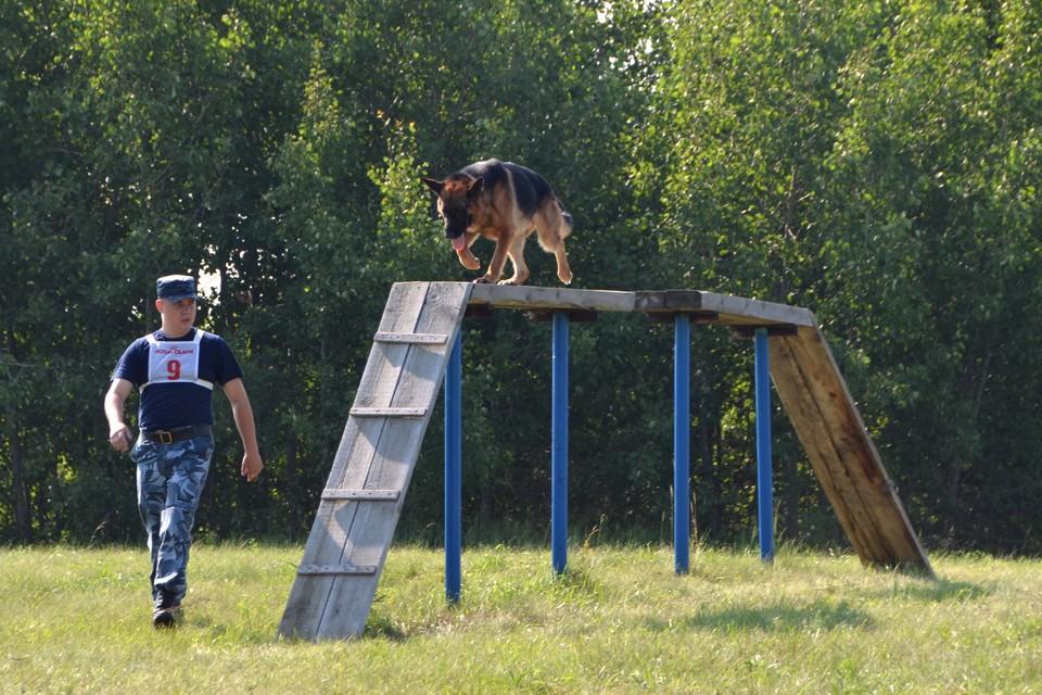 Собакам тоже нужно регулярно тренироваться, чтобы быть в форме. Фото: ГУФСИН России по Челябинской области