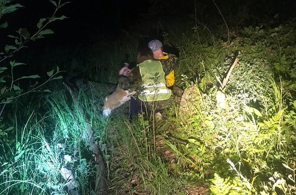 14-летний подросток почти сутки проблуждал с собакой по лесу и там уснул.