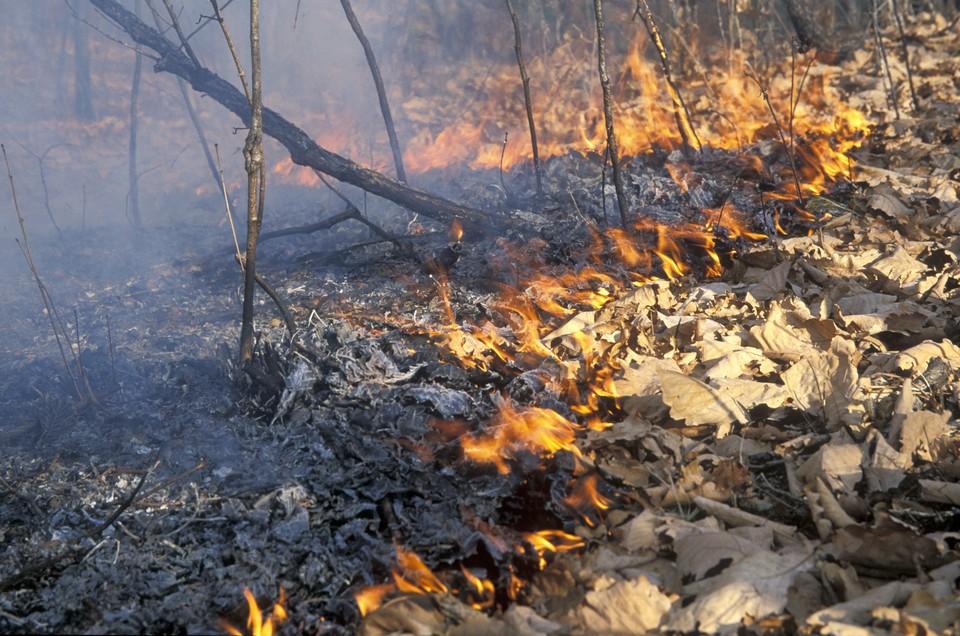 Гидрометцентр предупредил о высоком уровне пожароопасности на юге страны