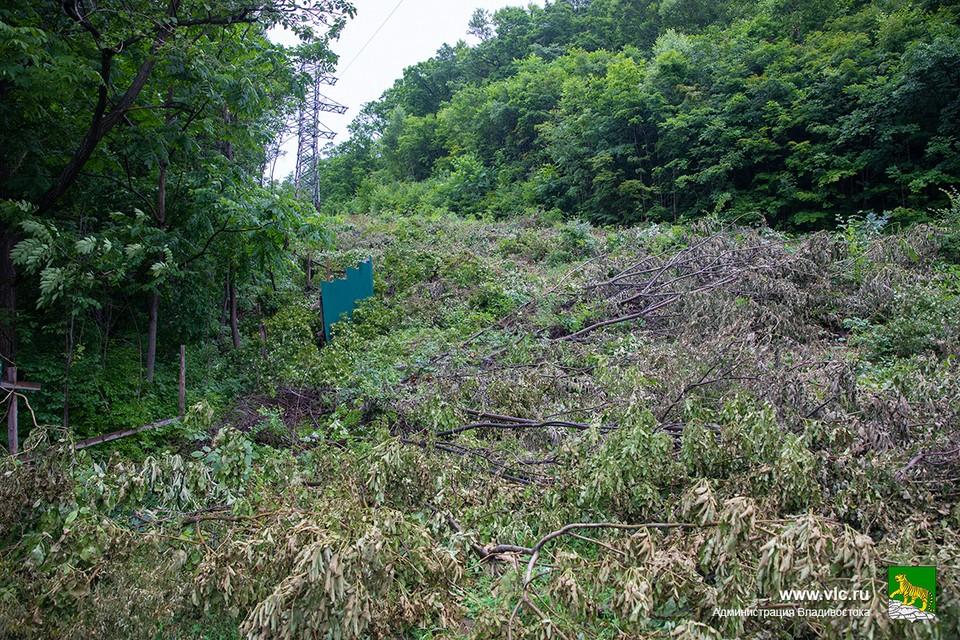 На участке протяженностью 400 метров обнаружена нелегальная вырубка. Фото: сайт администрации Владивостока