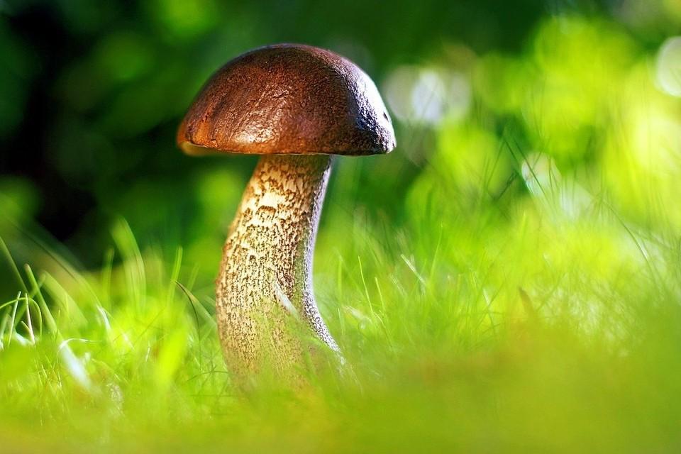 В Беларуси уже 11 человек отравились грибами. Фото: pixabay.com