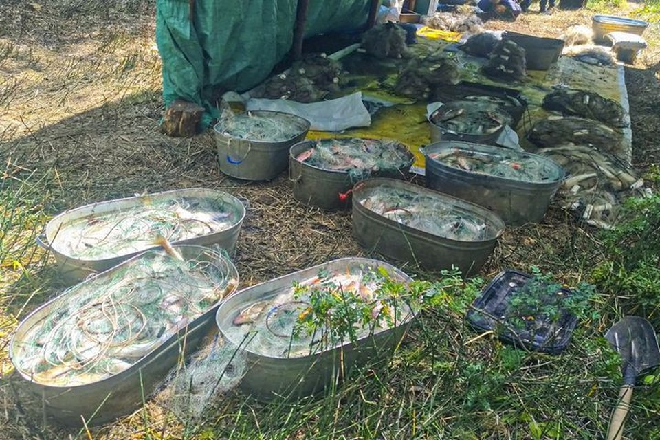 Сибиряк выловил рыбу на три миллиона рублей. Фото: пресс-служба УТ МВД России по СФО
