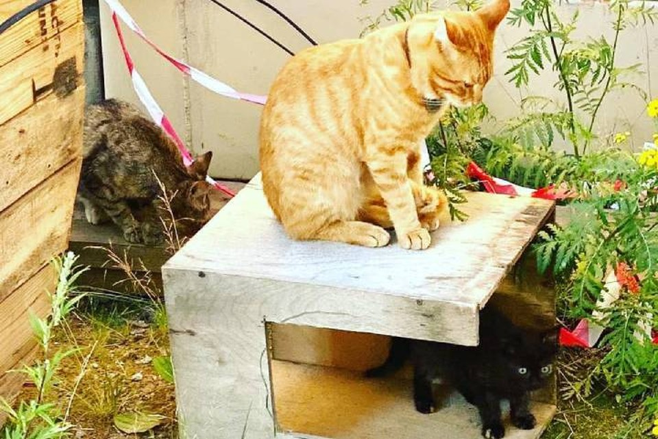 Лахтинский кот стал отцом и показал свое семейство / Фото: instagram.com/lakhtinskii