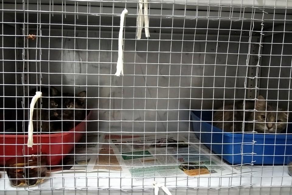 После каждого сильного дождя кошки вынуждены тесниться в клетках