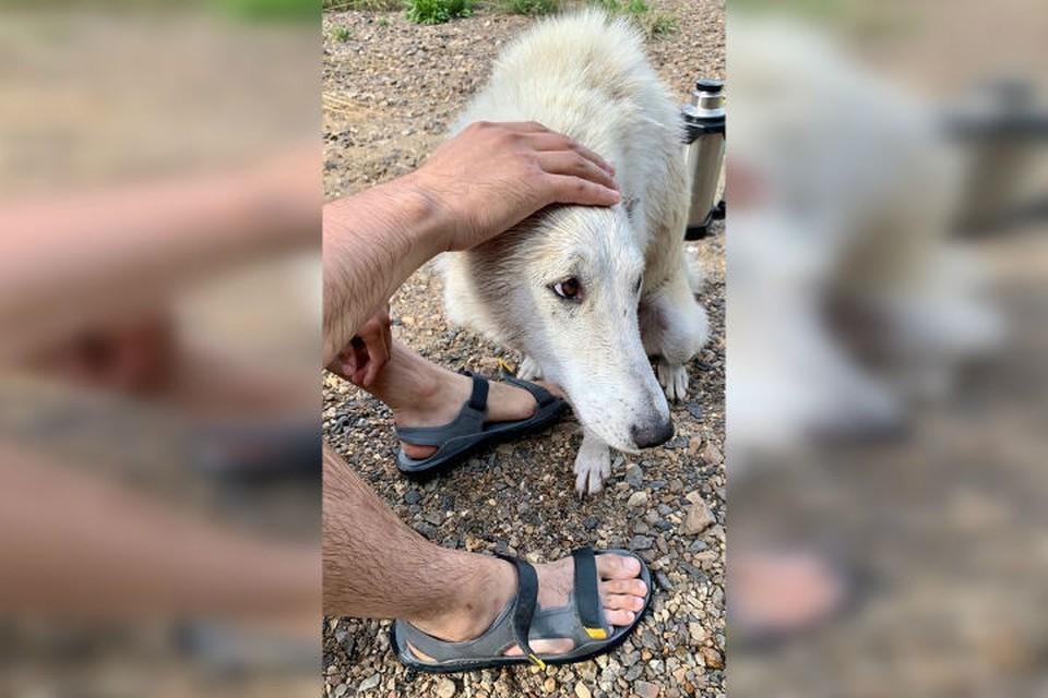 Собака благодарно облизывала руки своим спасителям Фото: Евгений Сысолятин