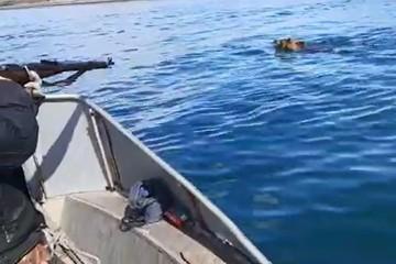 На Байкале туристы с лодки расстреляли медведя в упор из ружья и сняли это на видео
